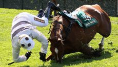 Horse falling at fence
